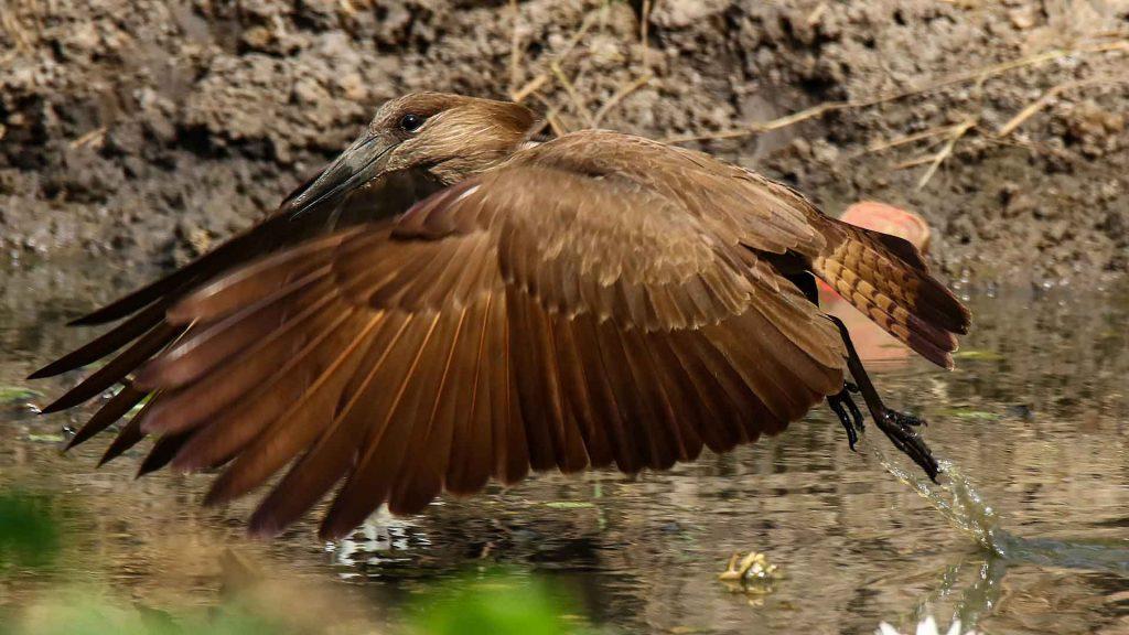 voyage ornithologique en Casamance