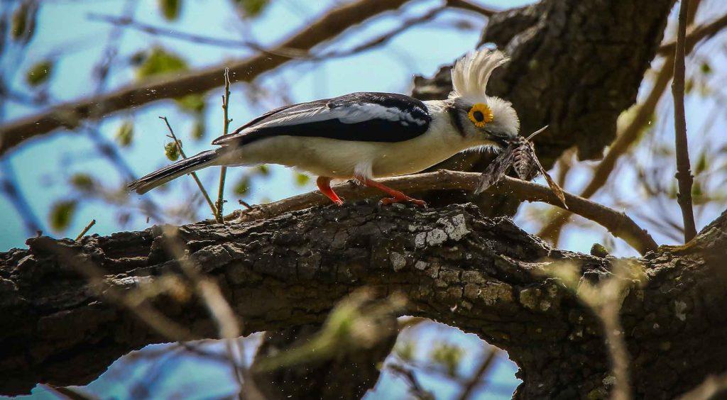 Article de presse ornithlogie au Senegal